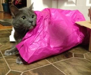 Tissue blanket