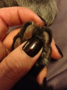 But what about painting Teddy's talons...