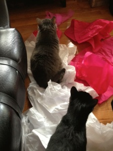 More interested in the crinkly tissue than one another