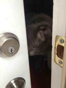 High hopes the door swings back open.