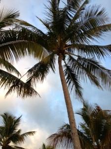 Palm me