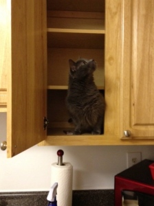 Fun in empty cabinets...
