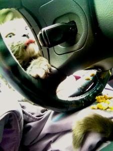 Car sick.