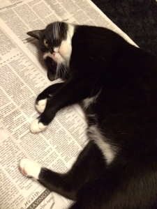 Reading the newspaper blocker. Cat blocker