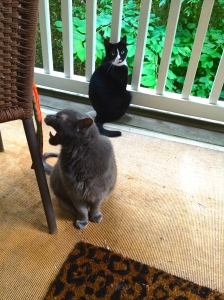 Two feuding felines. Ted can't keep his big mouth shut. Wonder where he picked those skills up?