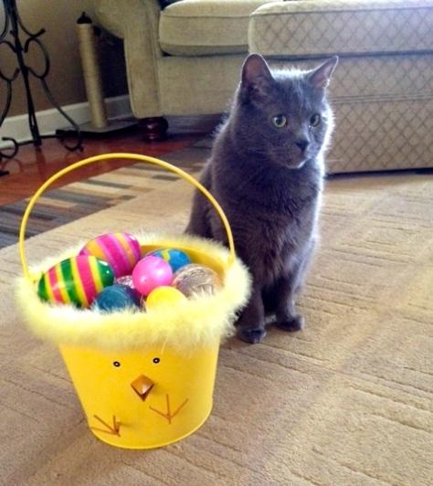 Easter King.
