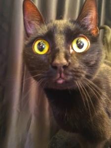 FUck. Those New Cat Eyes again.