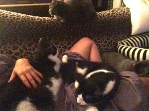 Clark, Eddie, Teddy and Presh.
